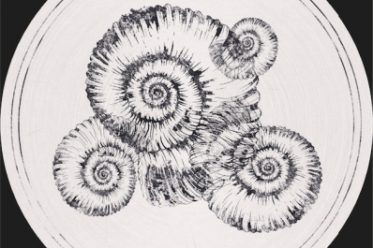 Roberto - Perisphinctes Tiziani Remixes